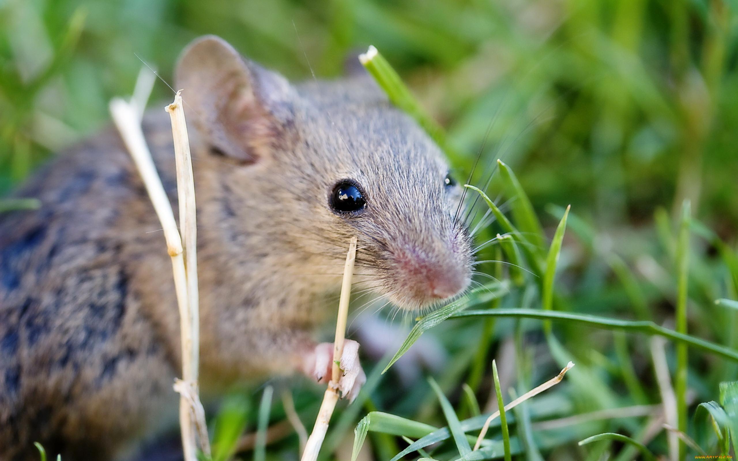плетение картинки мышей в спб задача реалистичное изображение